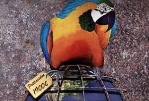 perroquet_globe