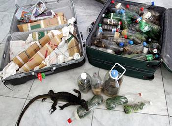 Des reptiles en bouteille