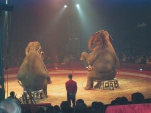Sabbah & Dehli - cirque Pinder (Franck Schrafstetter/One Voice)