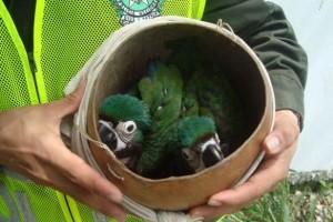 Oiseaux retrouvés par la police nationale colombienne - Interpol