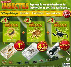 authentique-insecte