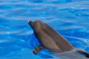Un dauphin au marineland d'Antibes