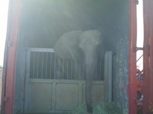 elephant-cagniac-kenya-07