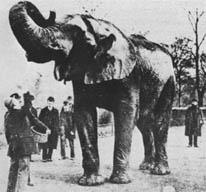 jumboelephant