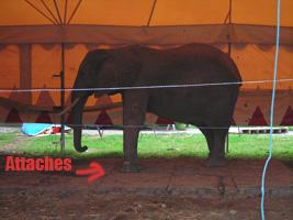 Un éléphant au cirque Médrano