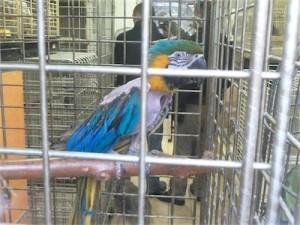 perroquet ararauna (photo 30 millions d'amis)