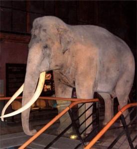 Siam, au musée d'histoire naturelle