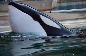 Les problèmes de peau au menton – Photo orcaaware.org