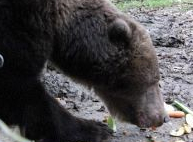L'ours Bene