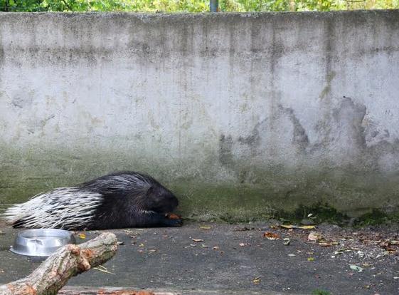 Le zoo d'Ozoir-la-Ferrière
