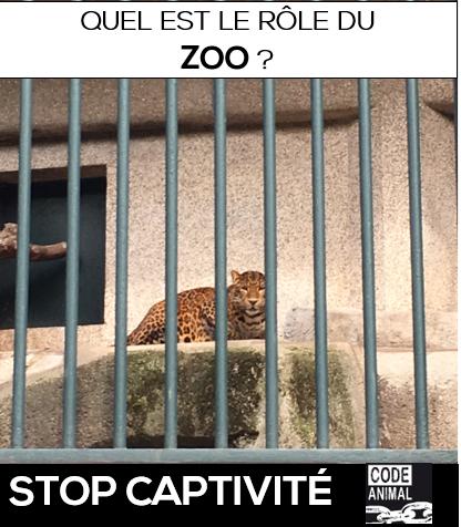 Zoo de Barcelone : Remise en question du rôle des zoos