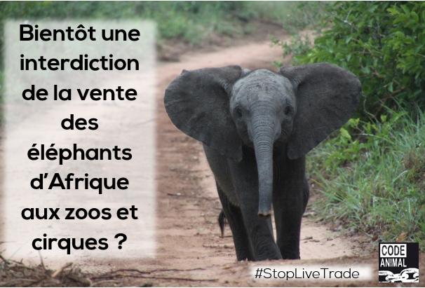 Interdiction de la vente des éléphants aux zoos et aux cirques !