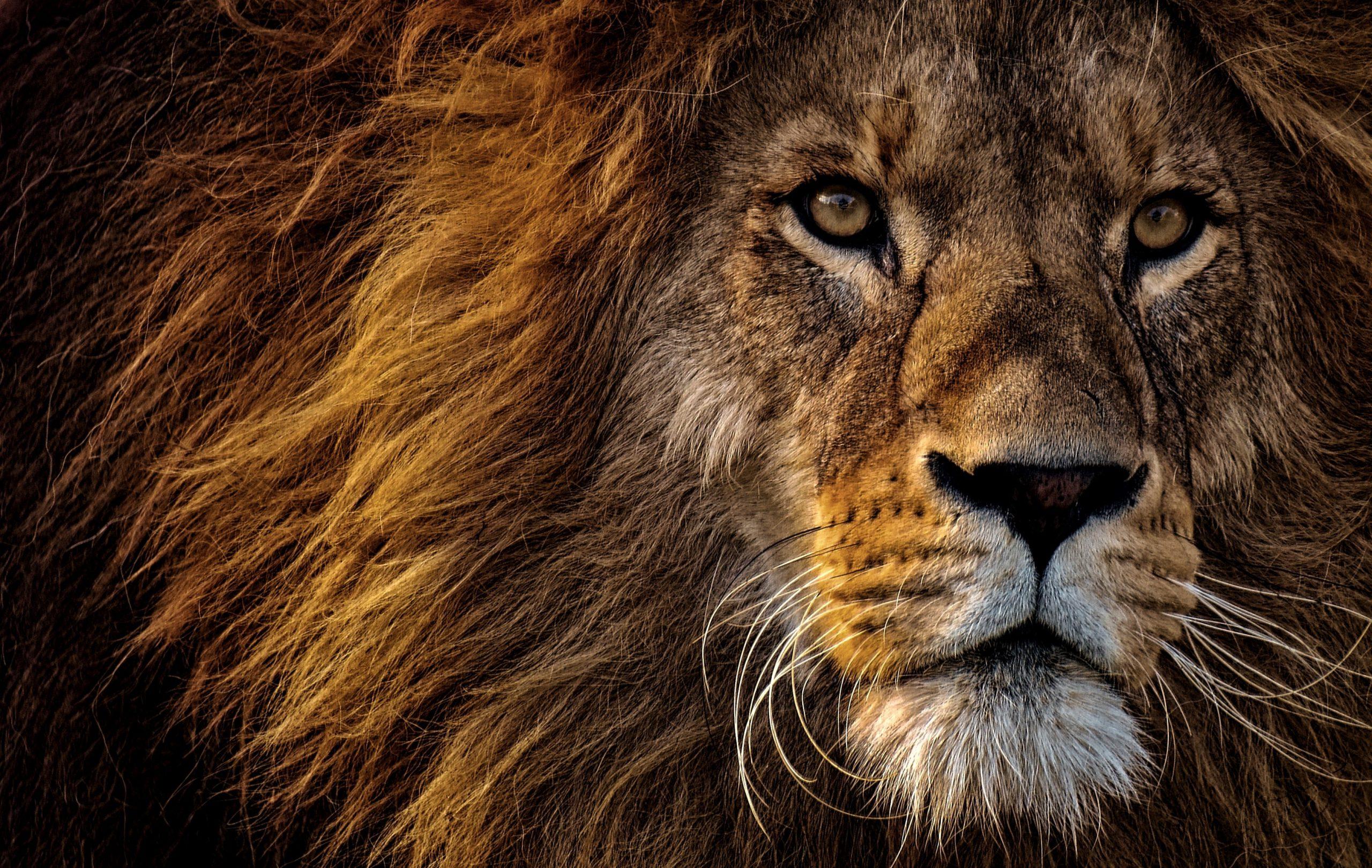 Code Animal Un Animal Hors De Son Espace N Est Qu Une Ombre